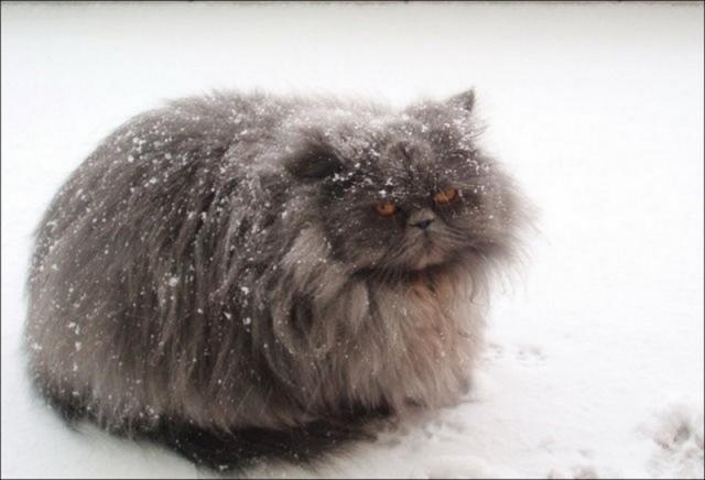 Кіт не підтримує Годину Землі