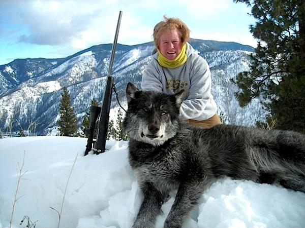 канадський вовк